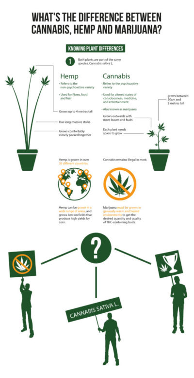 hemp, cannabis, marijuana, hemp vs cannabis