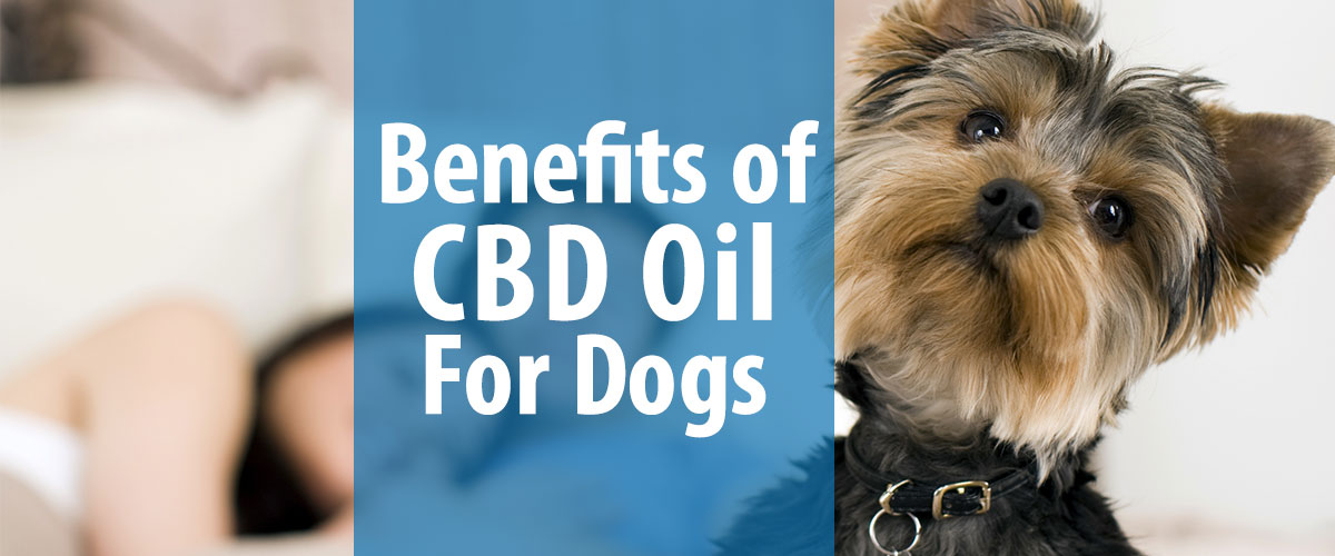 CBD for Dogs: Treating Your Pet With CBD