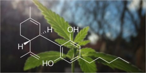how long does cbd last, how long does cbd last in your system